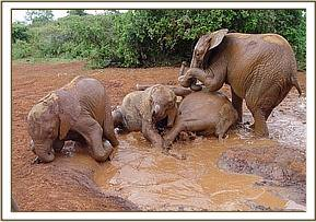 The nursery five playing in the mudbath