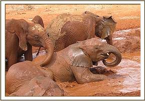 The orphans playing in the mud