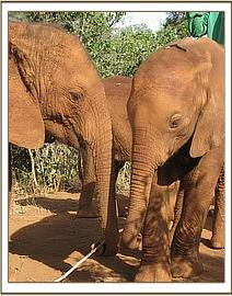 Mawenzi with a younger Nursery orphan