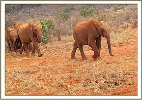 Kenia leading the way to the waterhole