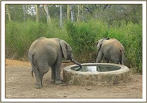 Sonje and Murera at the waterhole