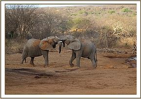 Wild elephant plays with Kijana