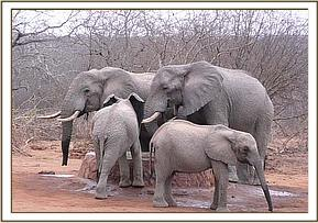 Challa, Ol Malo & Wild elephants at the stockades