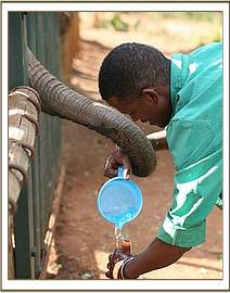 Abdi giving Murka water from a bottle