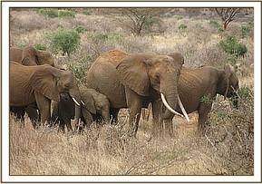 Wild elephants near the orphans