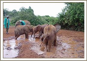 The orphans having fun during the noon mudbath