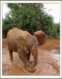 Naserian the little Matriarch covered in mud