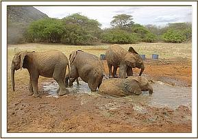 Ndomot, Galana, Sunyei & Madiba enjoying mudbath