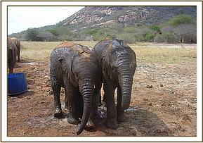 Sunyei and Ndomot wet after having their mudbath