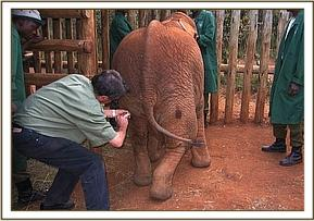 Kora receiving an injection