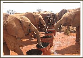 orphans drinking
