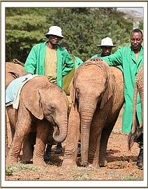 Kenia with Siria and Keepers behind
