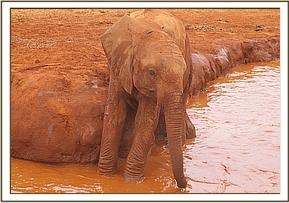 Kenia at the mudwallow