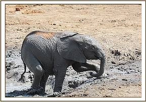 Lemoyian mud bathing