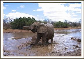 Galana and Imenti at the mudwallow