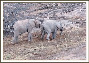 Kithaka pushing Lemoyian