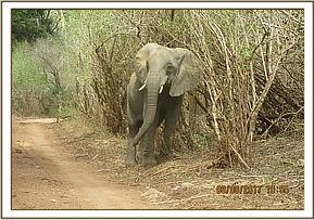 Murera on the way to bottle feed time