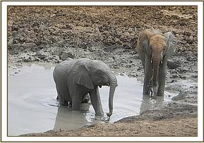 Ololoo and Tumaren at the mudbath