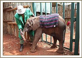 Narok gets attention from a keeper