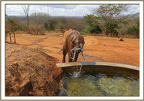 Shimba at the stockade watertrough