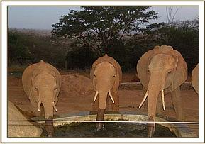 Layoni, Dabassa and Lempaute having a drink