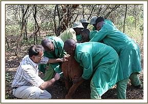 Maalim gets an anti-biotic injection from the vet