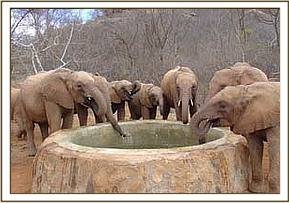 Orphans taking a drink outside their stockades