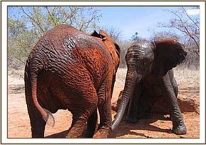 Sunyei and Olmalo scratching