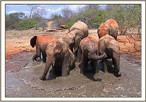 The orphans wallowing in the mudbath