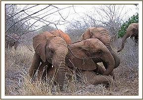 Taita, Wendi and Napasha playing together