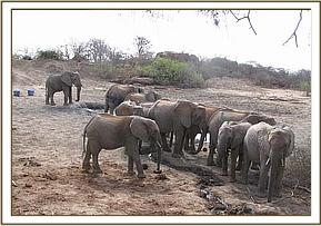 yatta group with a wild elephant at mud bath