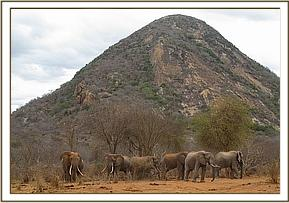 Mshale and 6 wild elephants