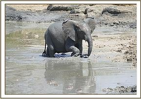 Wanjala mud bathing