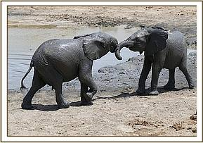 Boromoko playing with Lemoyian