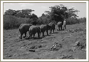 The orphans head home after a day in the bush