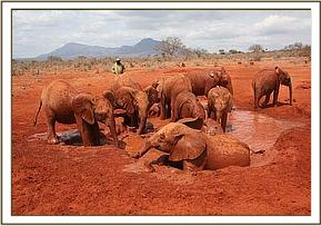Orphans enjoy a mud bath