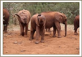 Naseku and Godoma playing with her trunk