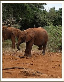 Ngilai was being naughty at the mud bath