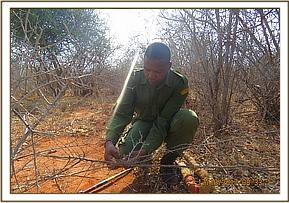 Lifting snares at the powerline area