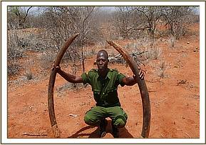 Recovered Tusks