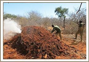 Active charcoal kilns sighted and destroyed
