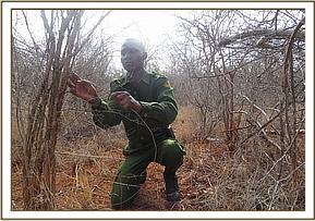 Big game snare lifting at Kalovoto area
