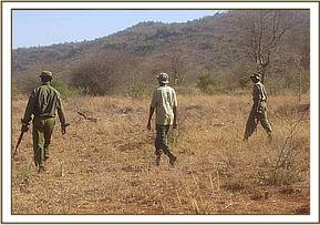 DSWT de-snaring team patrolling with KWS