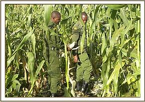 Assessing crop damage