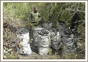 Bags of charcoal ready for transport