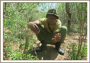 A member finds a snare at chamanyenzee