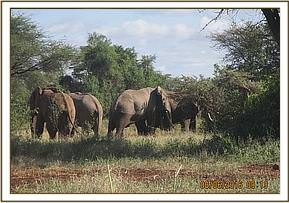elephants sighted
