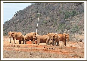 A family of elephants  along the water pipeline