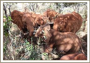The orphans crowding around the new member of their herd