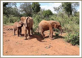 Enkikwe mit Dupotto und Embu